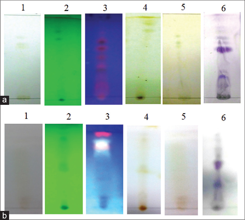 Figure 4: Thin-layer chromatography profiling of <i>Bruguiera gymnorrhiza:</i> (a) diethyl ether extract, (b) butanol extract under; (1) before sprayed, (2) UV<sub>254</sub>, (3) UV<sub>365</sub>, (4) iodine vapor, (5) Dragendorff's reagent, and (6) anisaldehyde reagent