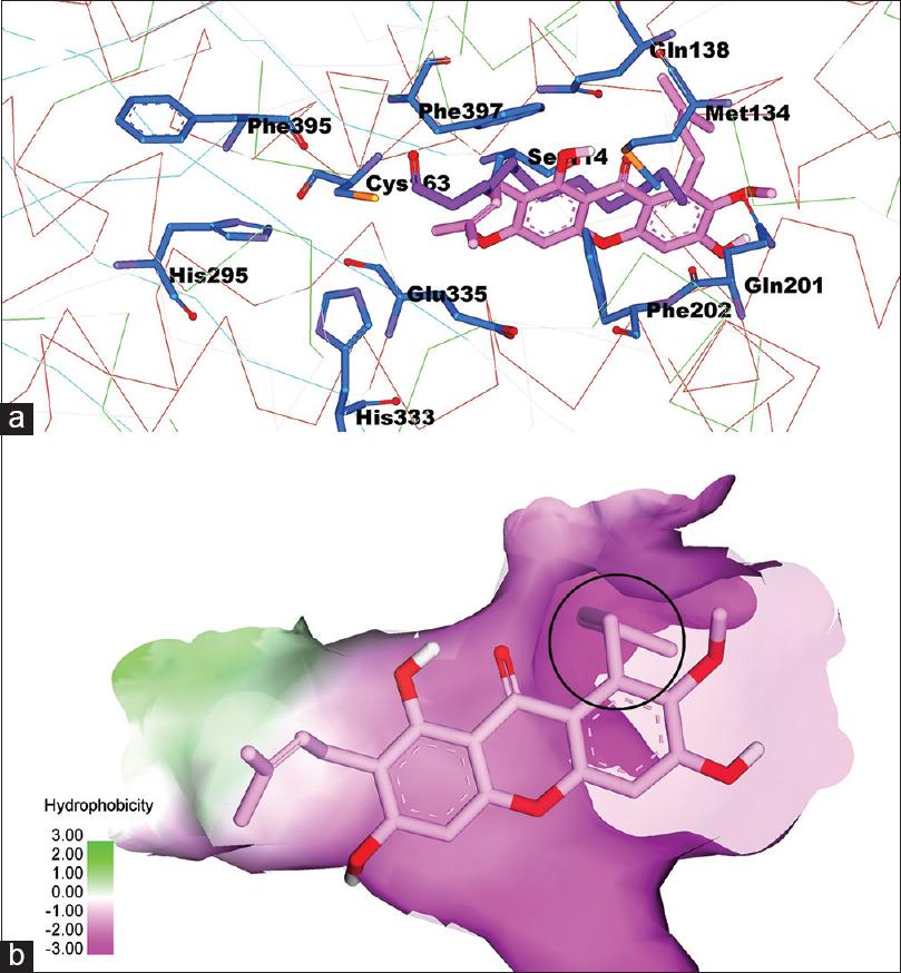 Figure 4: (a) α-mangostin interactions on the active site of fatty acid synthase-ketoacyl synthase, (b) the FAS-KS active surface based on hydrophobicity properties